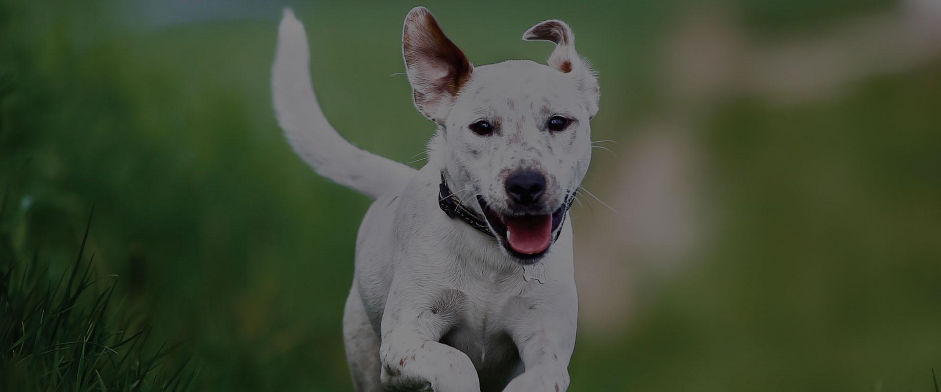 Alabama Pet Fence Alabama S Best Electronic Hidden Dog